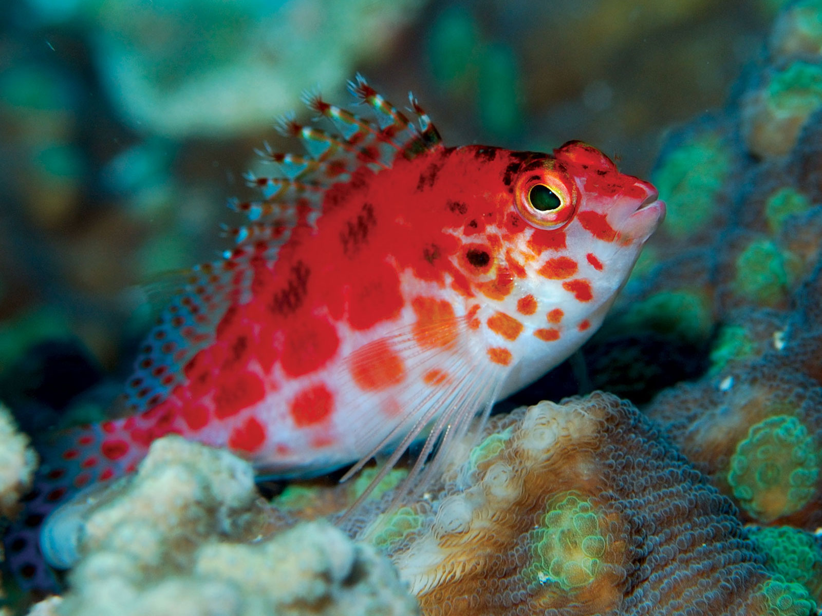 Gallery Tours & Safaris - diving-and-snorkelling