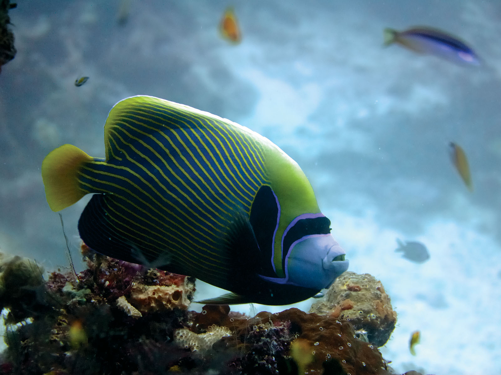 Gallery Tours & Safari - Diving & Fishing