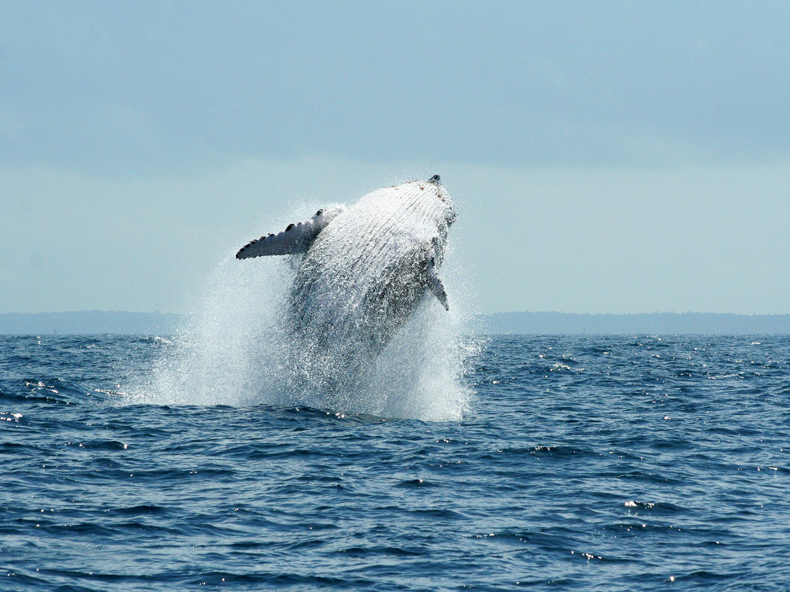 Gallery Tours & Safaris - whale-watching-tours